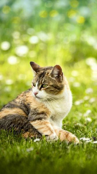 Cat in the fields