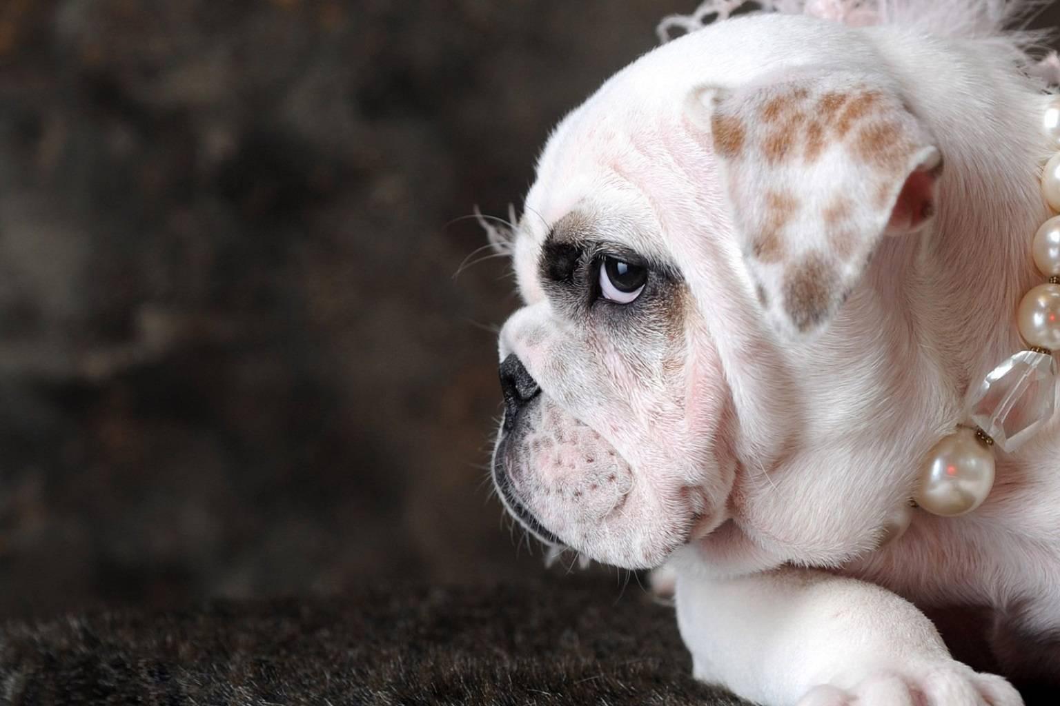 Puppy Pearler