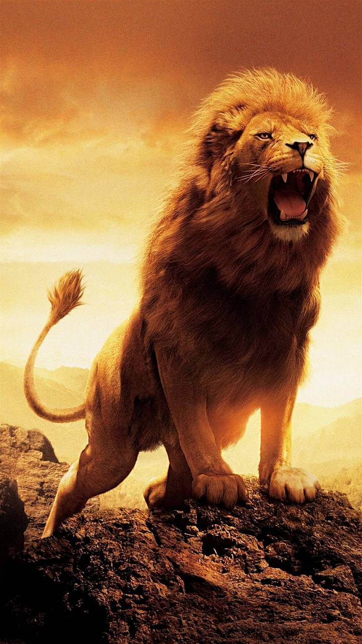 Mad Lion Wallpaper By Georgekev 44 Free On Zedge