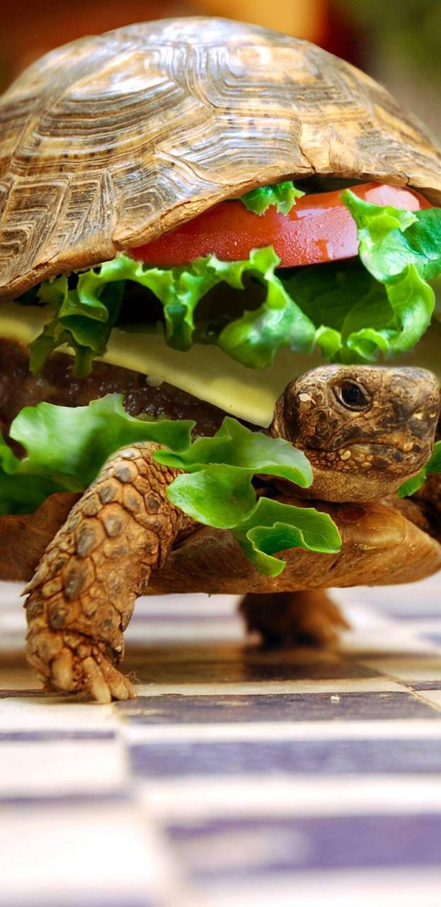 Hamburger Turtle