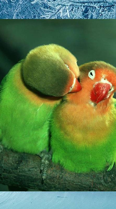 A peck on the neck