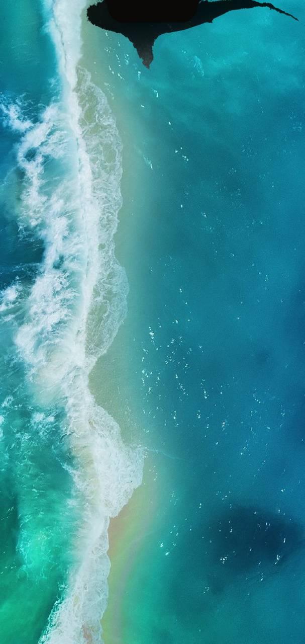 Moto Beach Shark