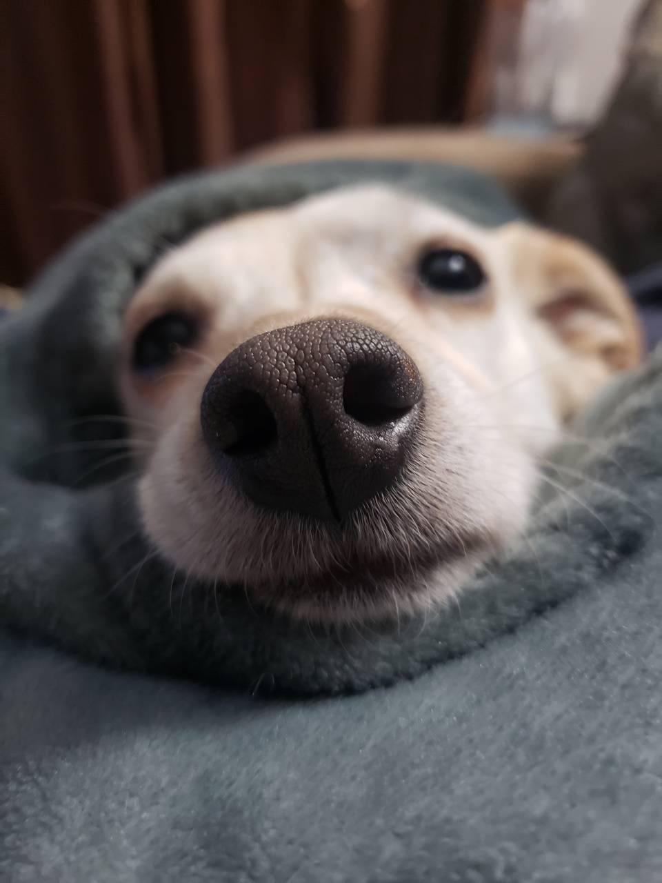 Bella boop