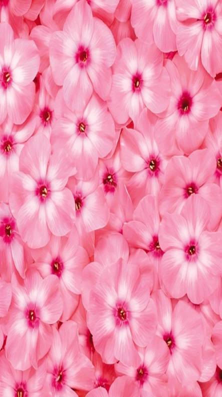 Nice pink wallpapers free by zedge pink flowers mightylinksfo