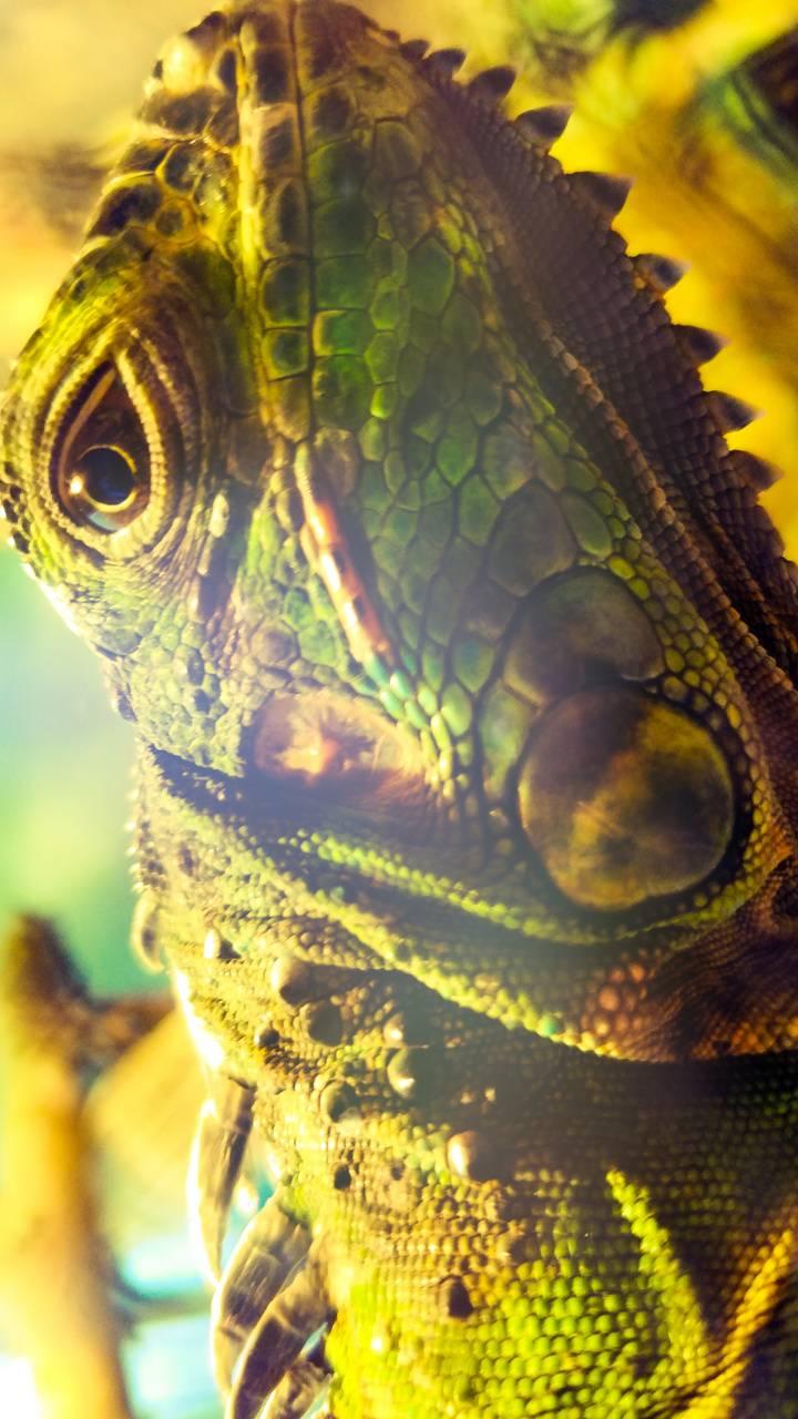 Reptil Mexico