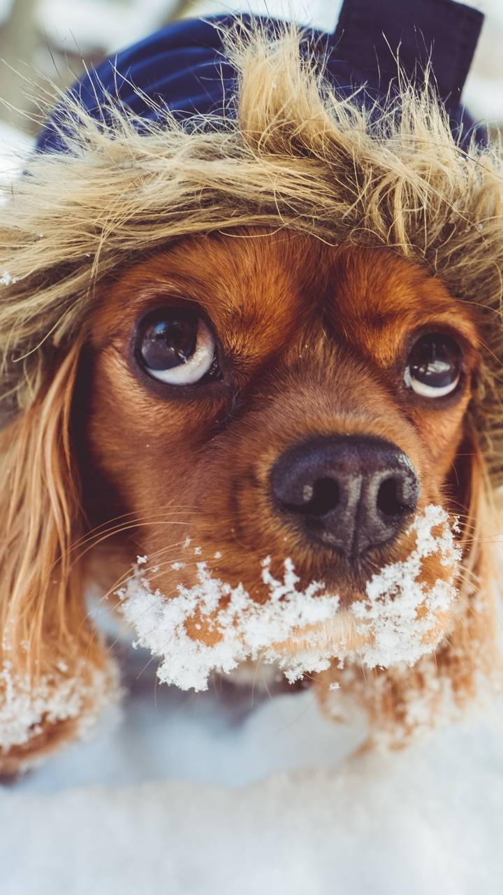 sweet dog wallpaperthebebo - 2e - free on zedge™