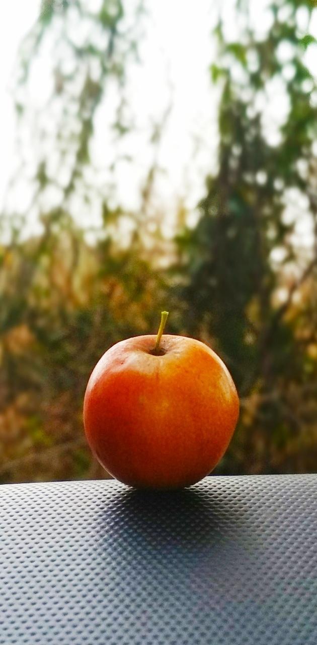Zizyphus plum