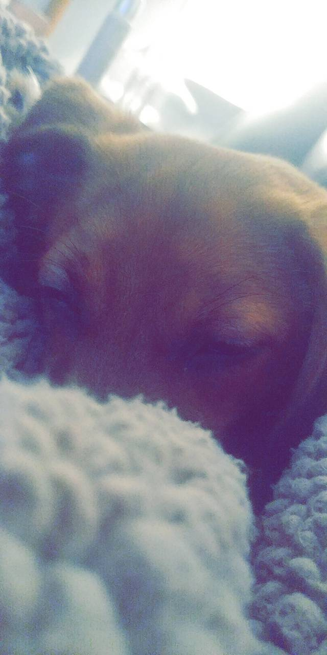 Lilly cutie