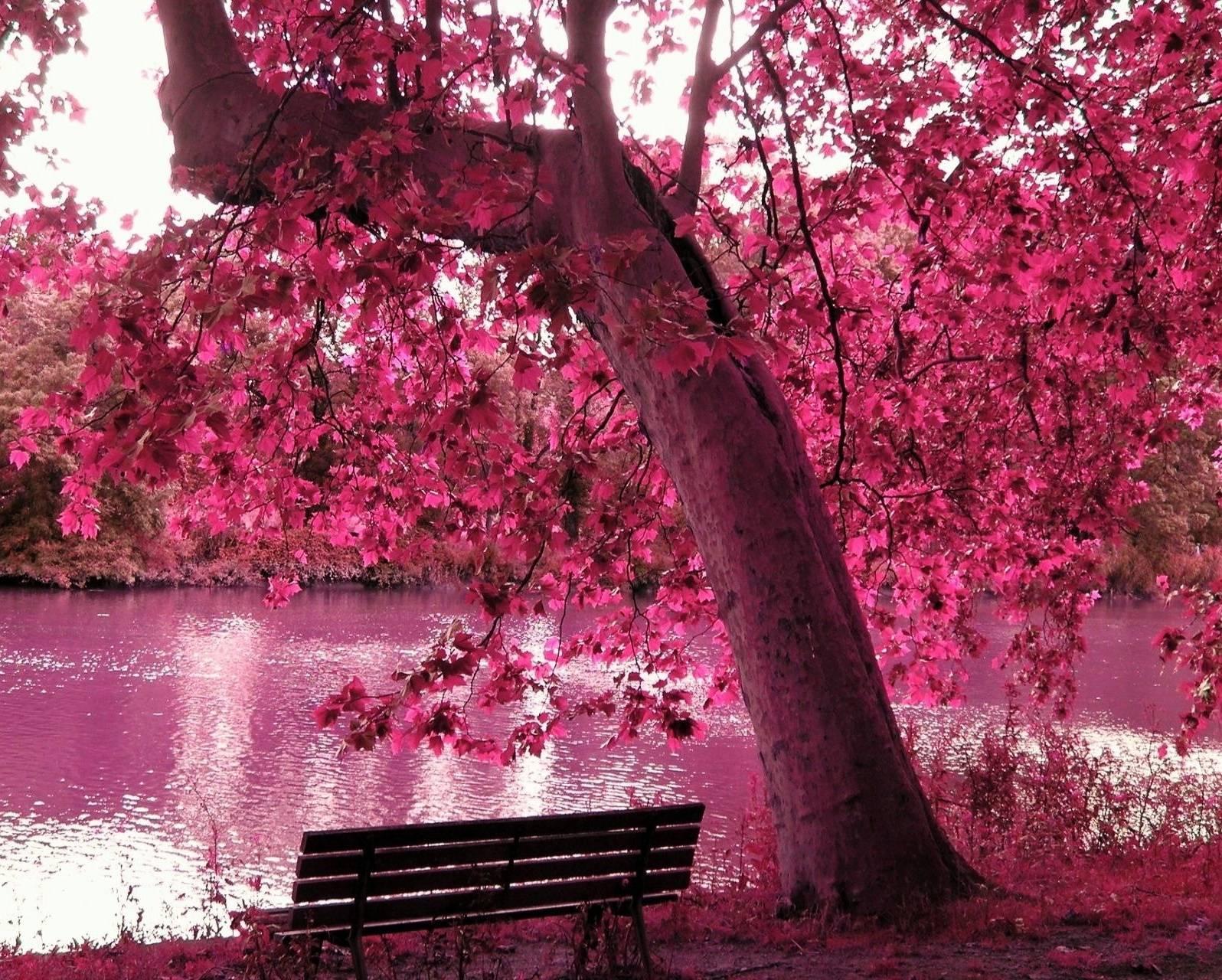 Pink Nature