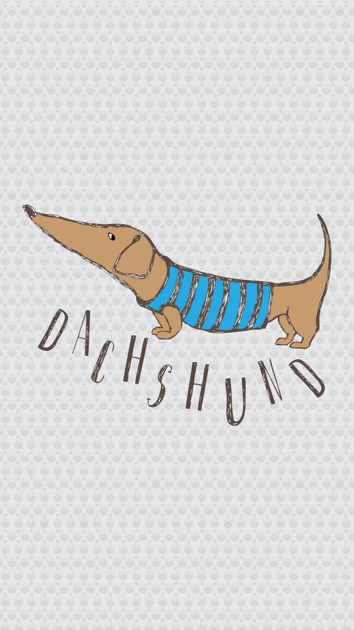DACHSHUND CUTE
