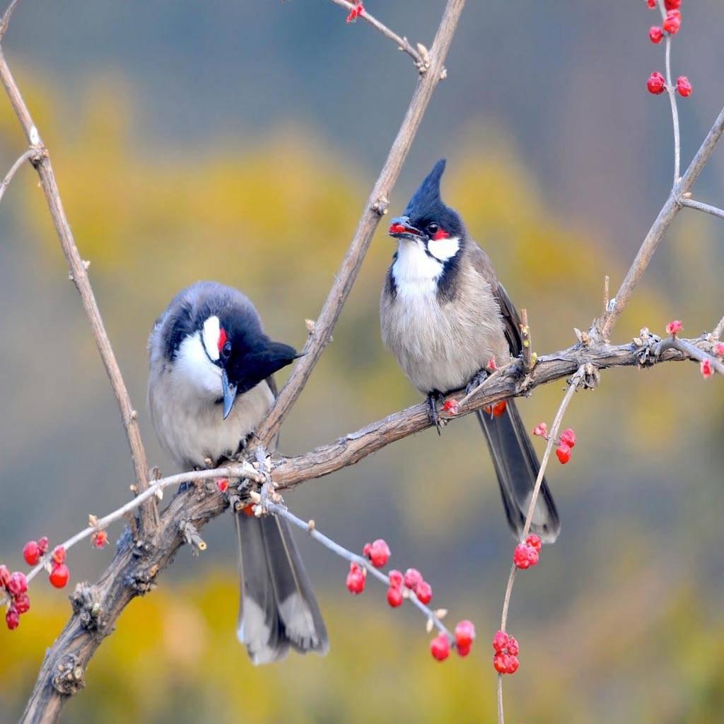 Nature Animal Birds