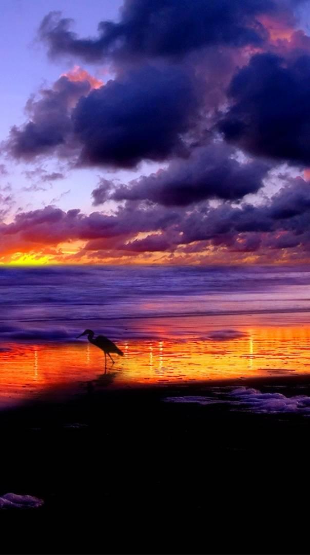 Morning Beach Bird