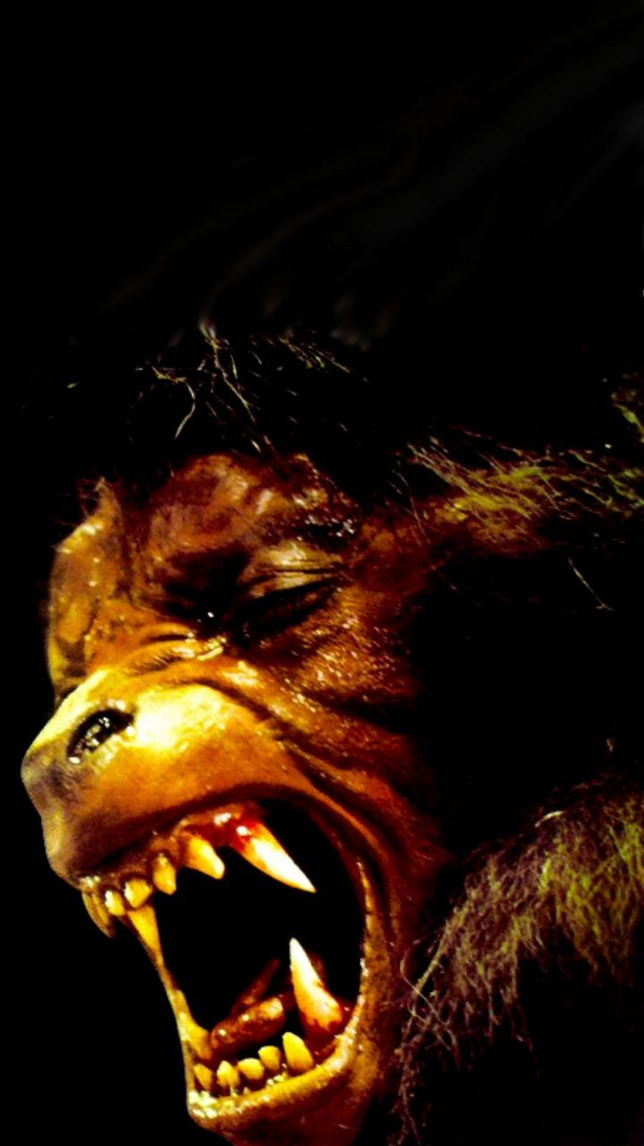 American Werewolf Wallpaper By Cleg Hat 70 Free On Zedge
