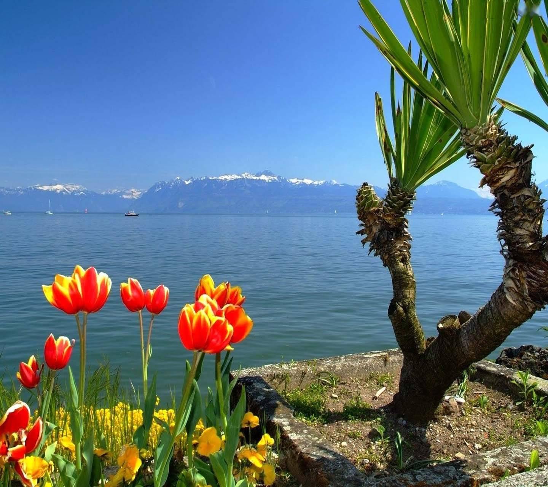 Lake Side Spring