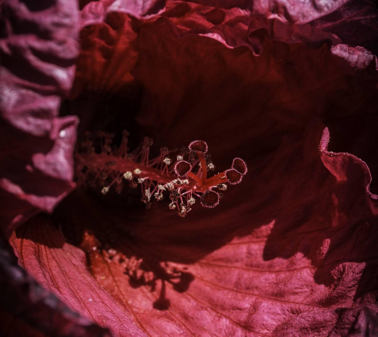 Hot Pink Flower II