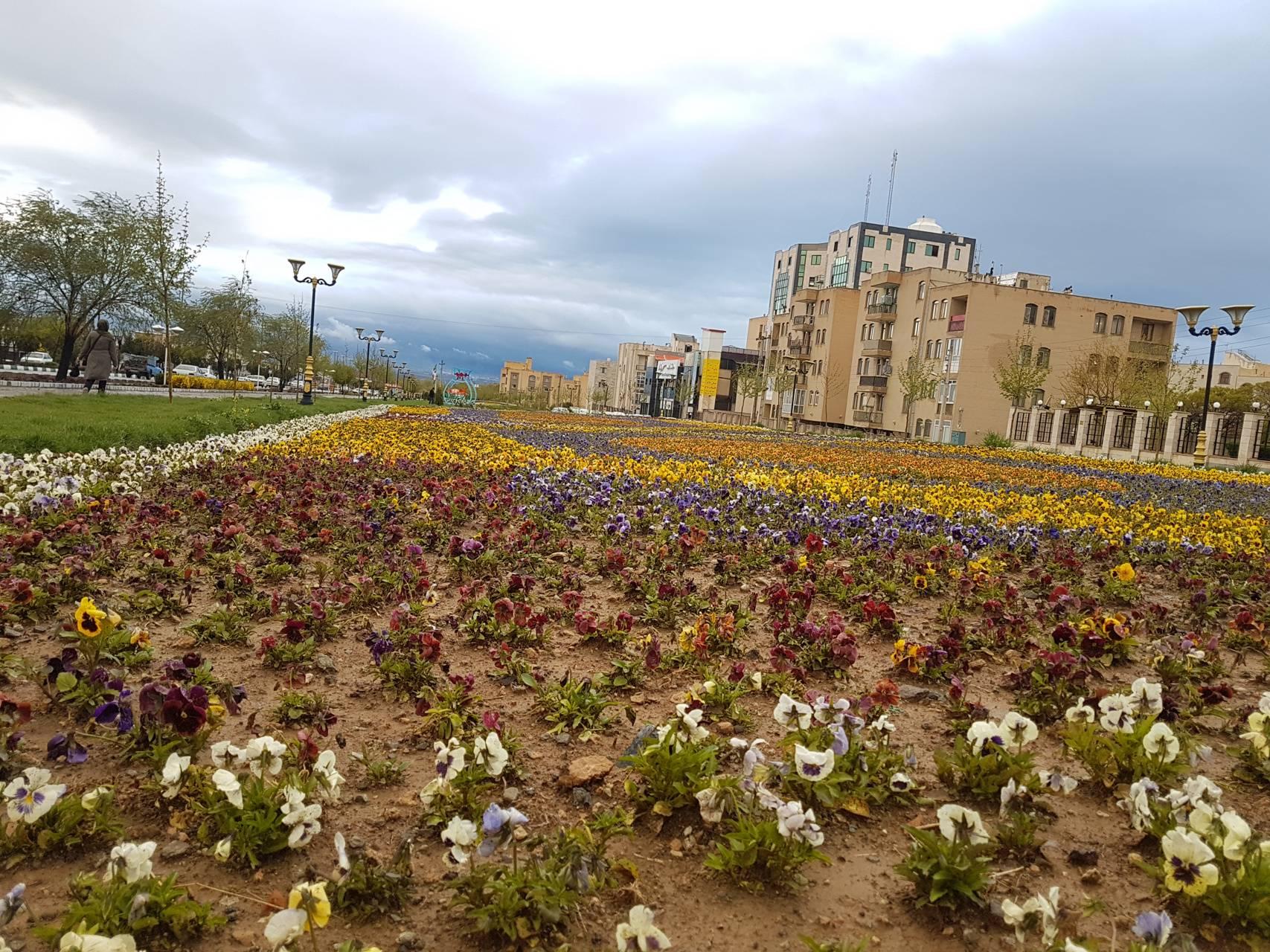 flowers iran
