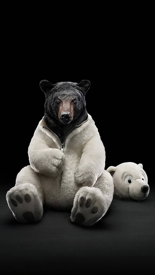 Truth About Bear