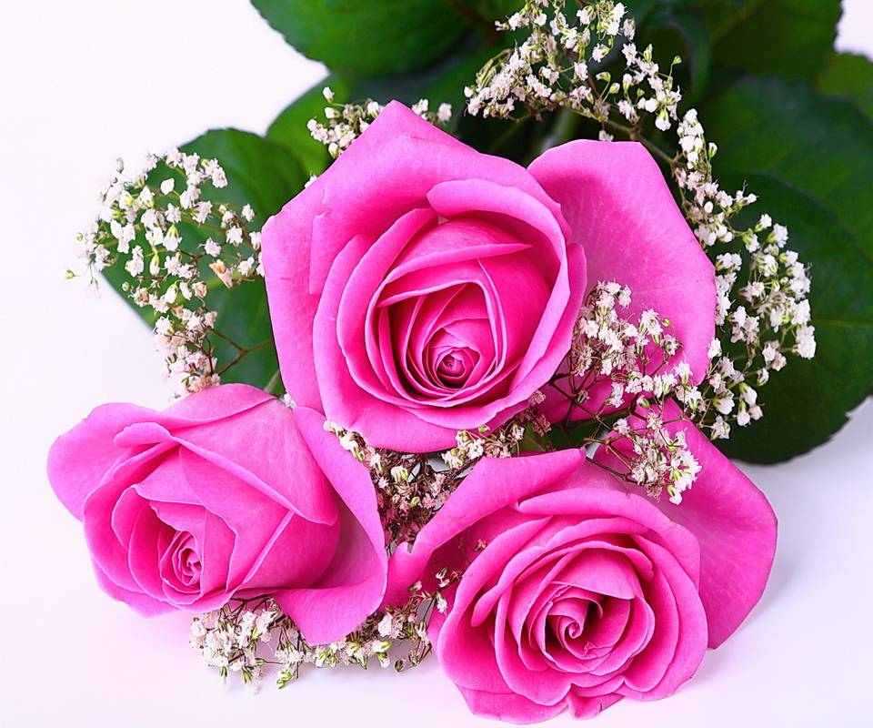 Pink Roses For You