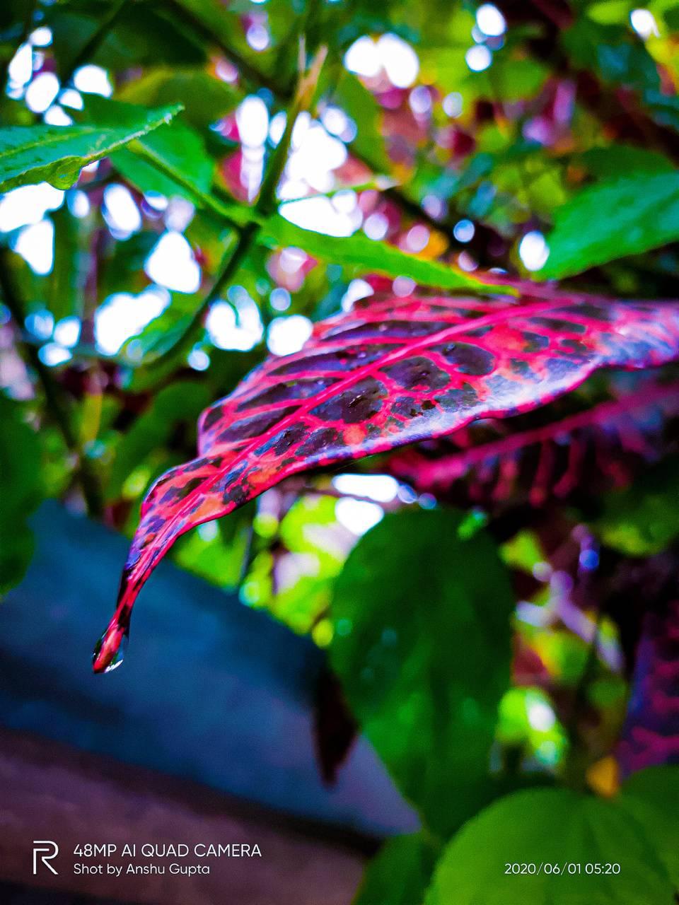 red leaf waterdrop
