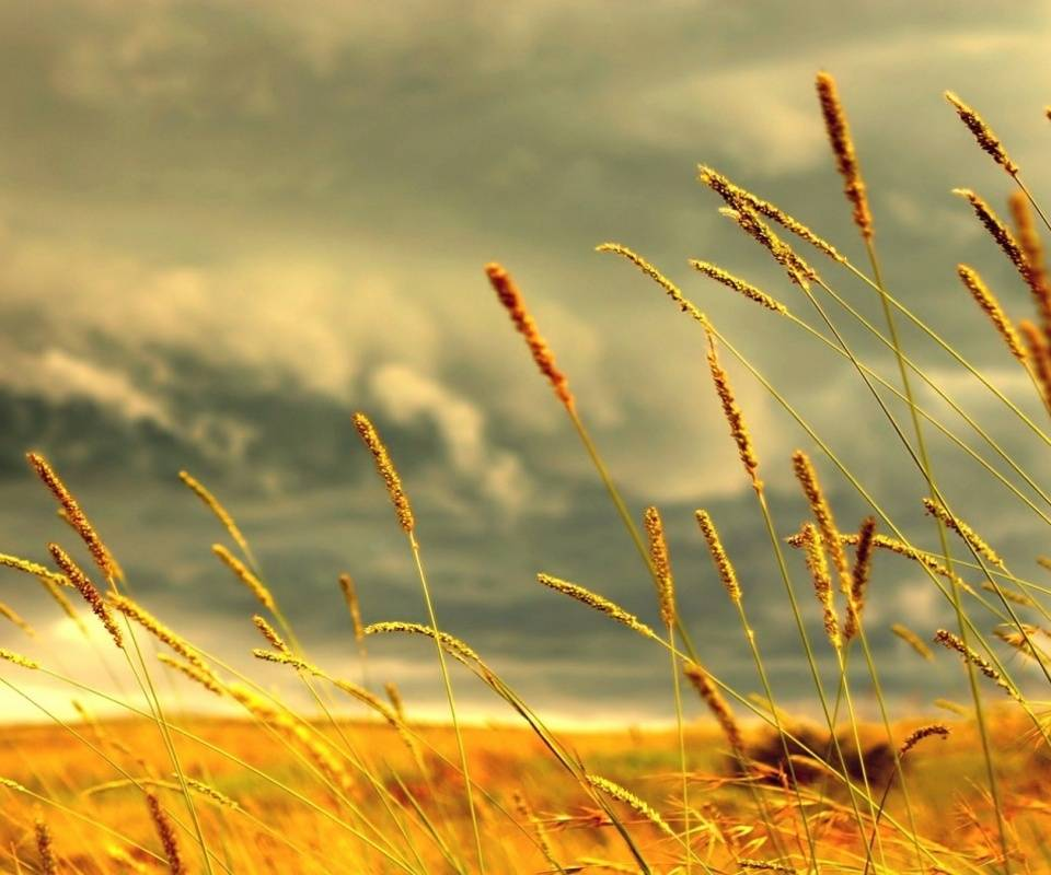 Wheat Fiels