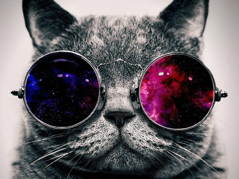Hippster Cat