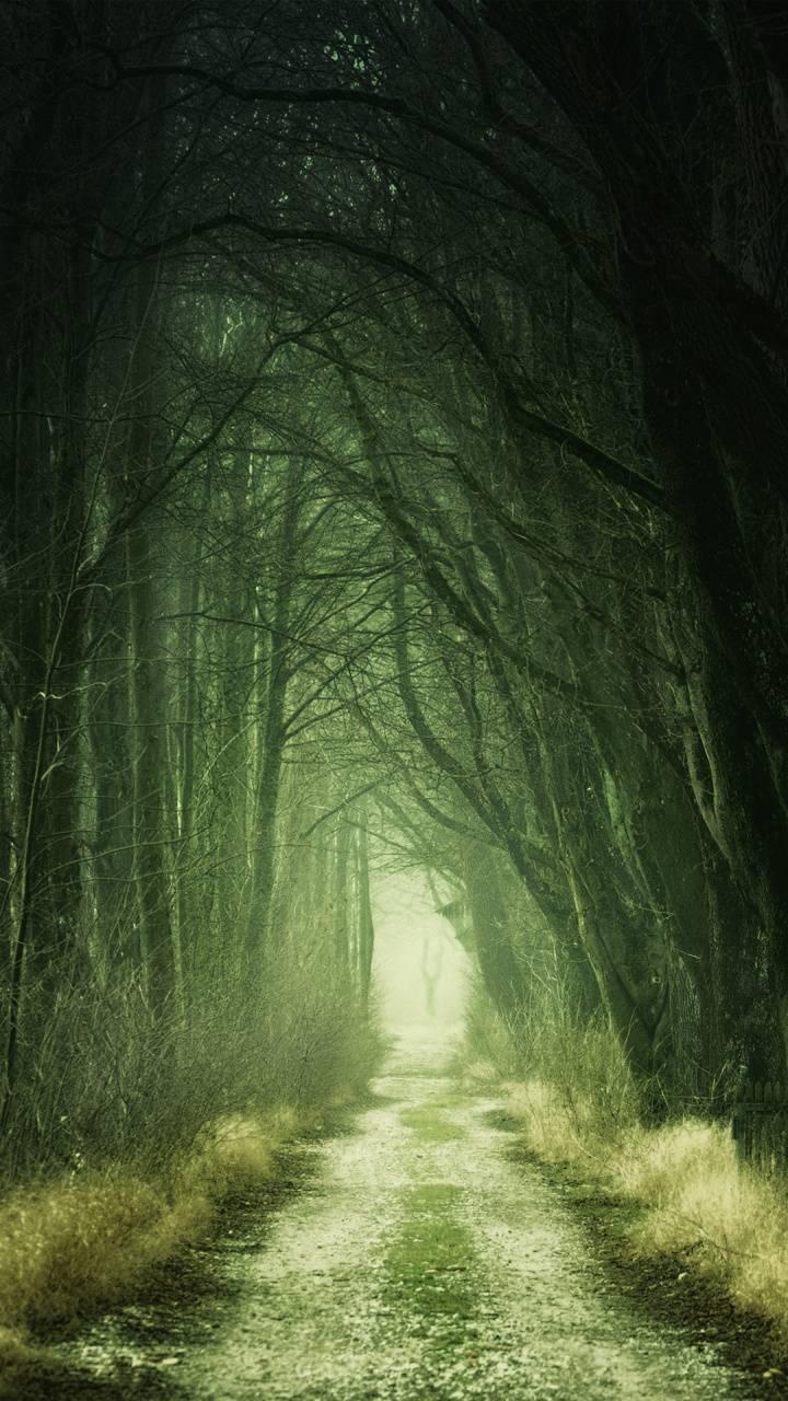 Forest Passage 4K
