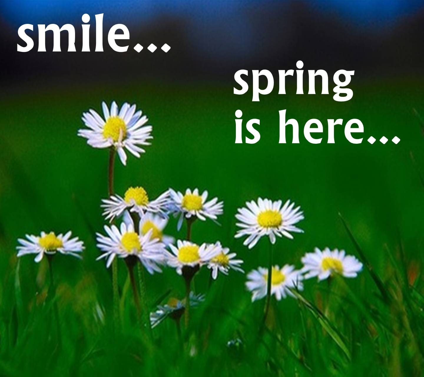 Smile Sping Here