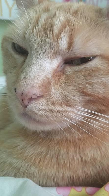 Kitty cat glare