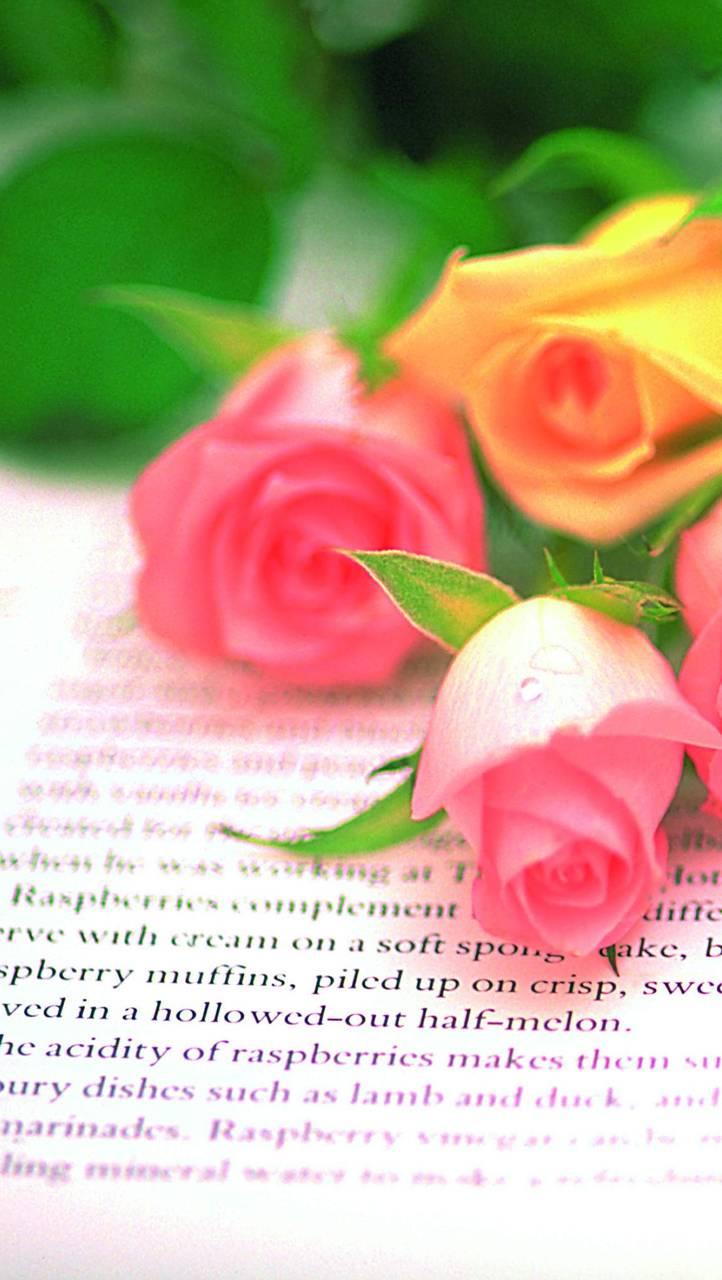 Hd Roses