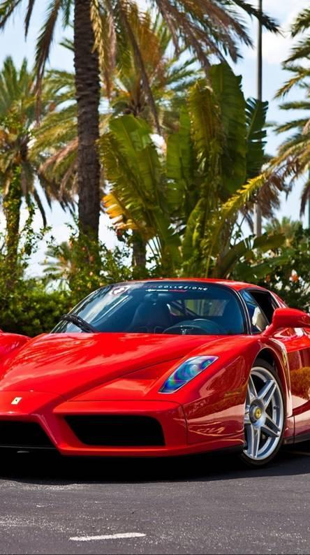 Ferrari Enzo Wallpapers Free By Zedge