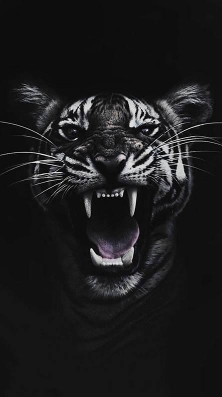 Black Tiger Wallpaper Artistic Joyful