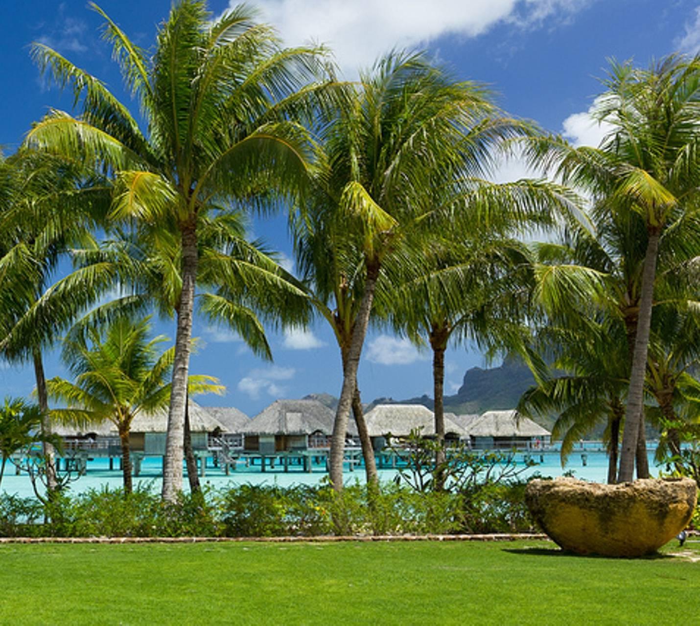 Bora Bora Palms