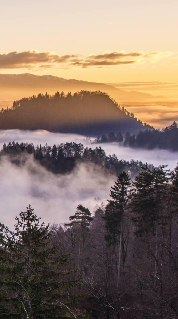 Morning Fog Mountain