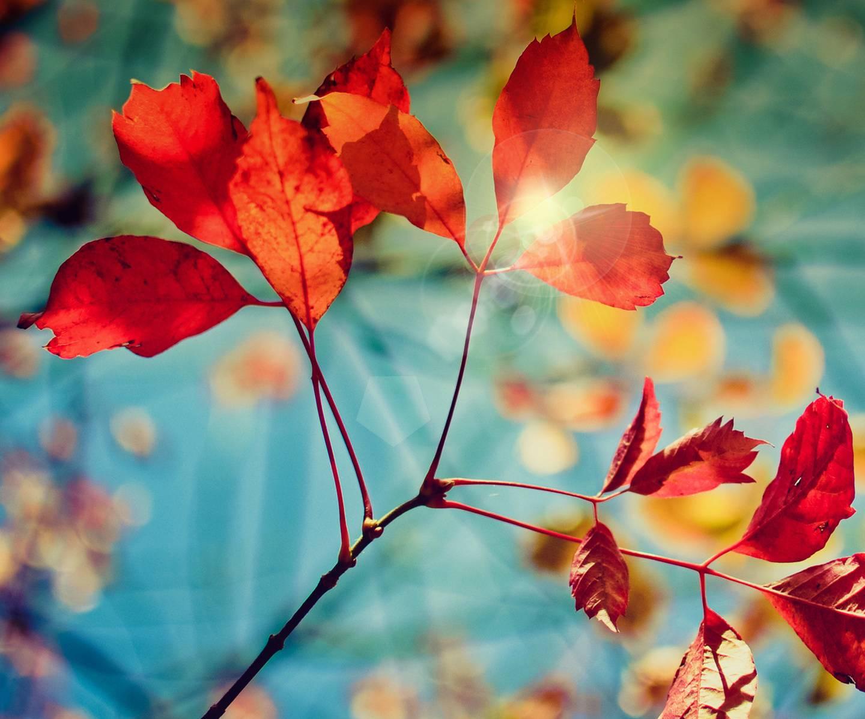 Galaxy S4 Autumn