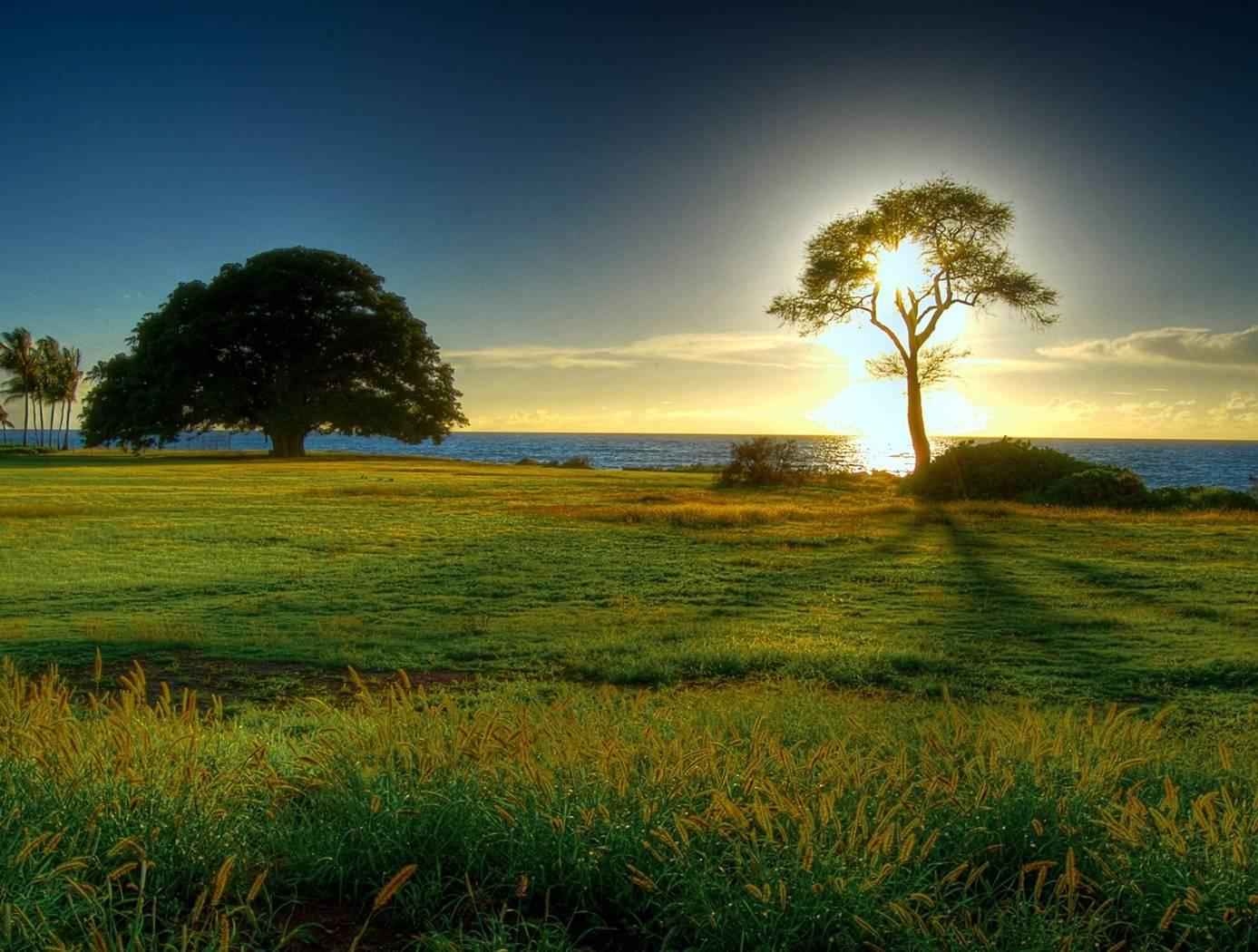 Trees-landscape