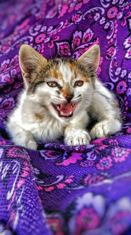 Kedi-cat