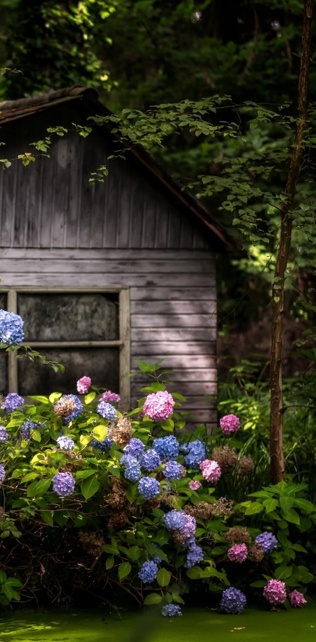 House in garden