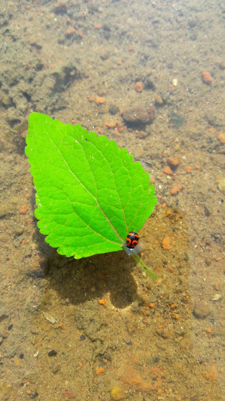 red worm in a l leaf