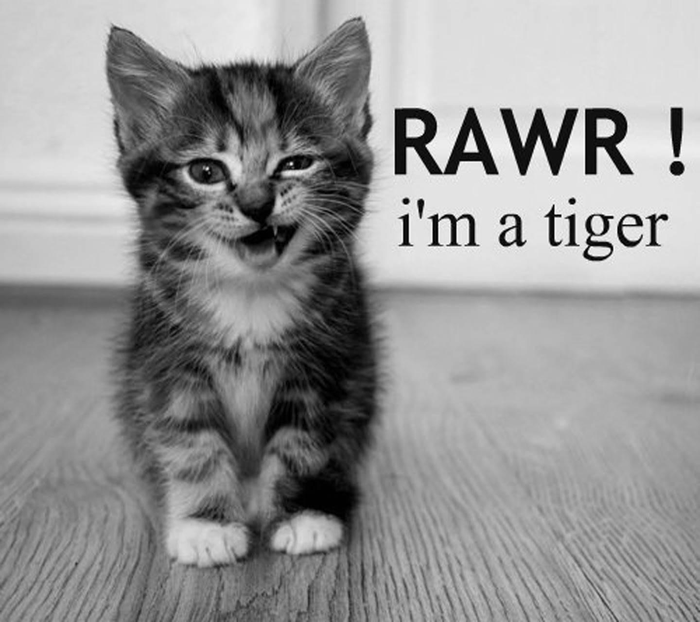 Definitely a tiger