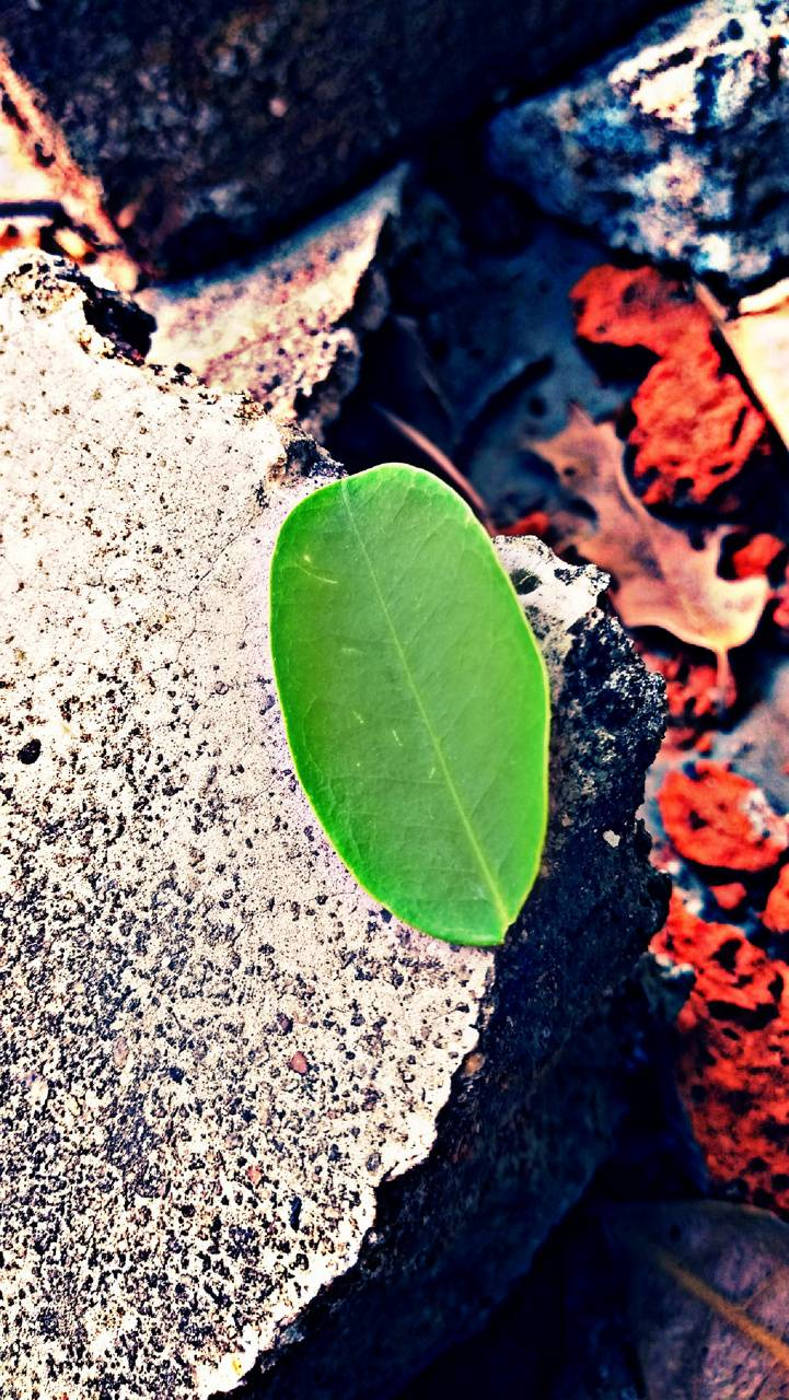 leaf by wolf