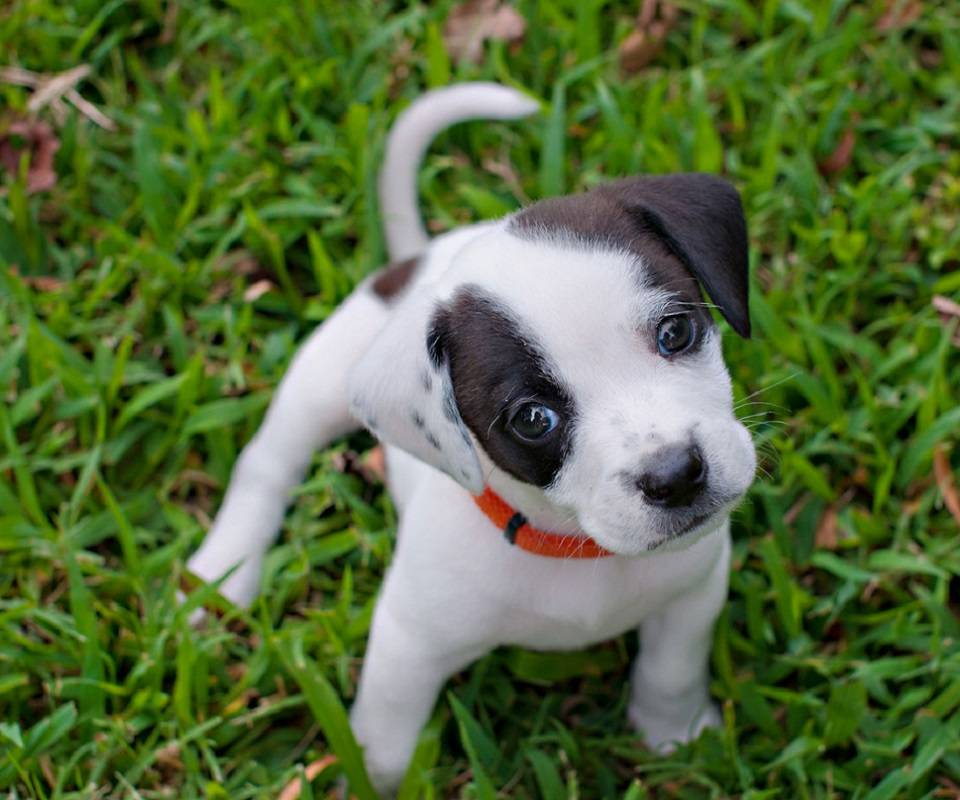 Lawn Pupp