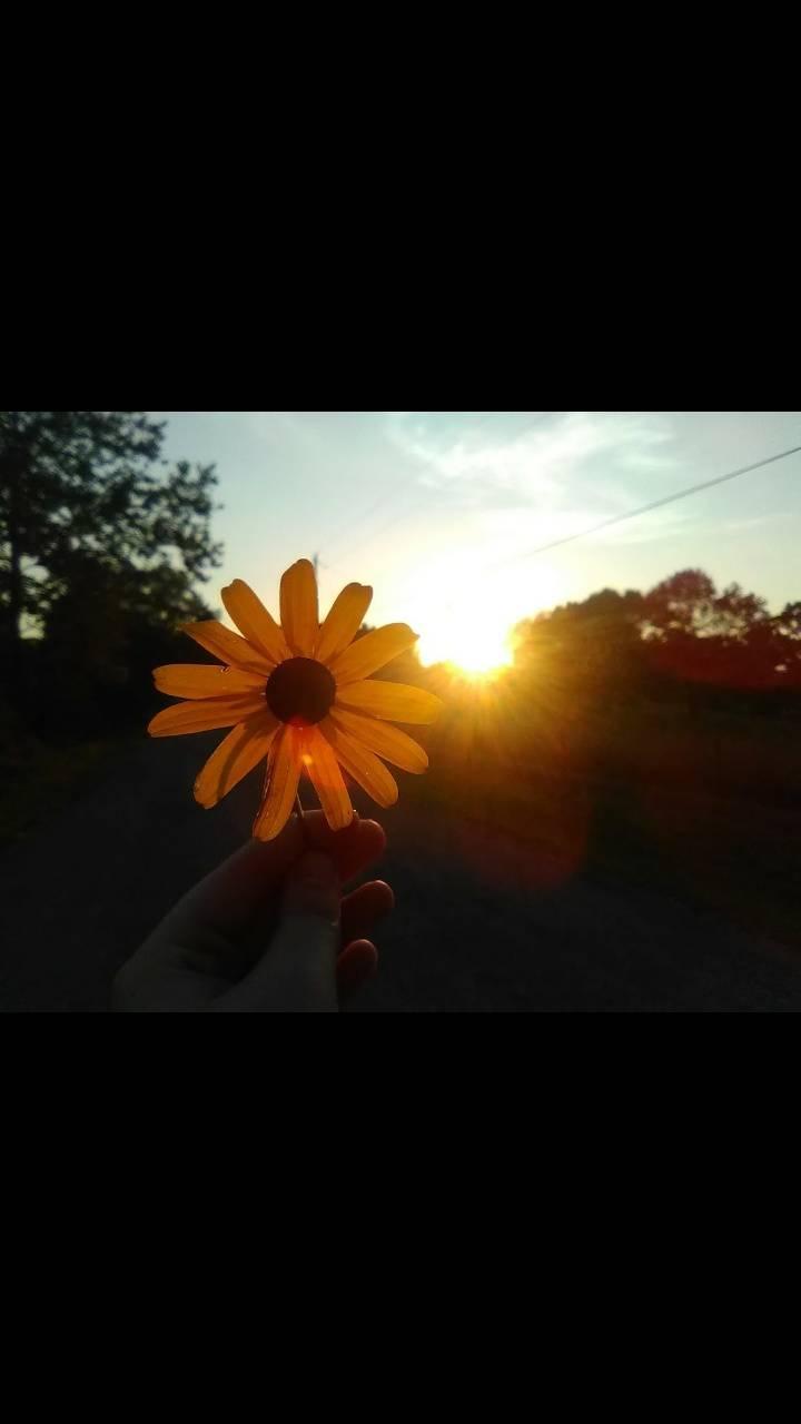 Aesthetic flower
