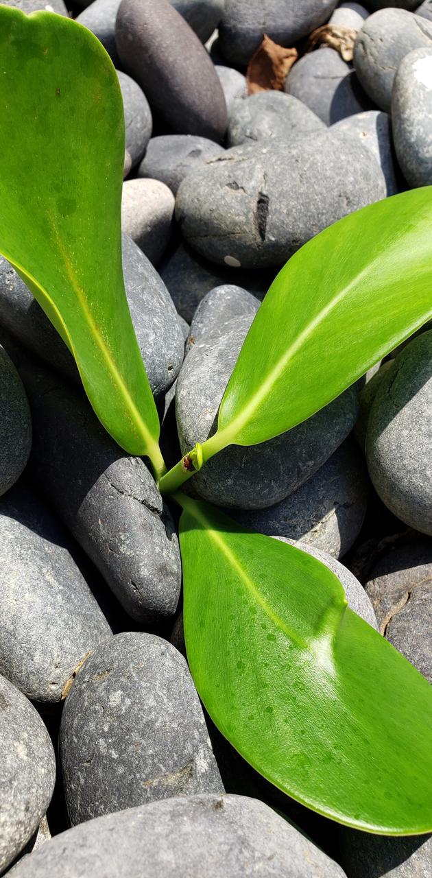Green Plant on Rocks