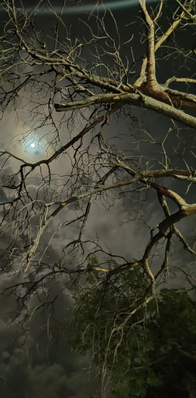 Dark skymoon
