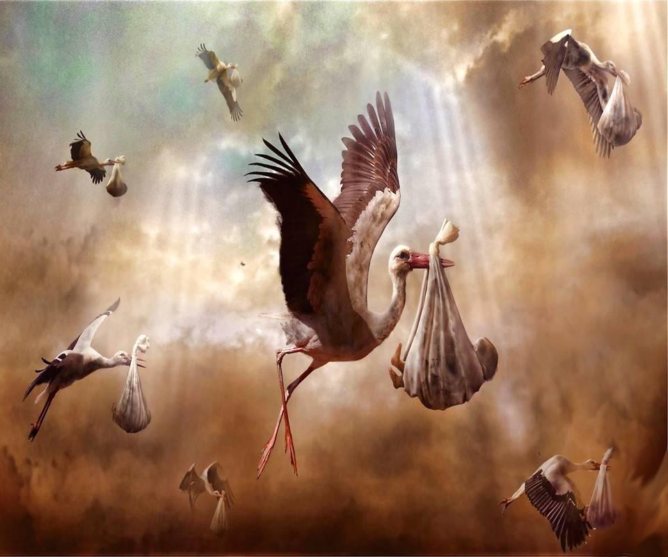 Stork Deliverary