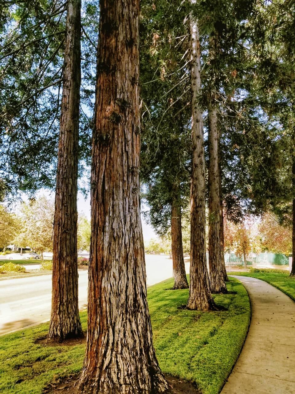 San Jose Nature