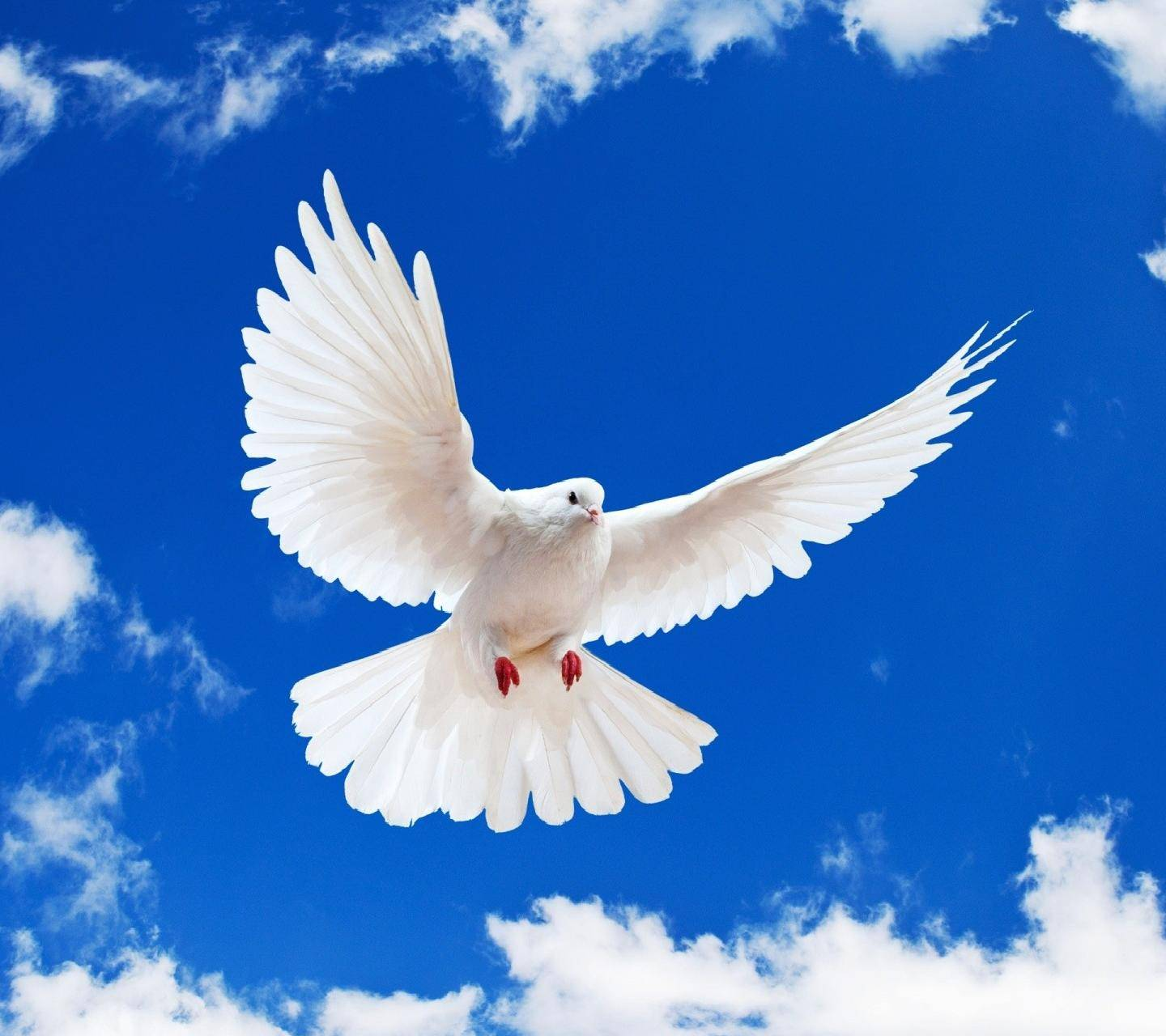 White Dove Blue Sky
