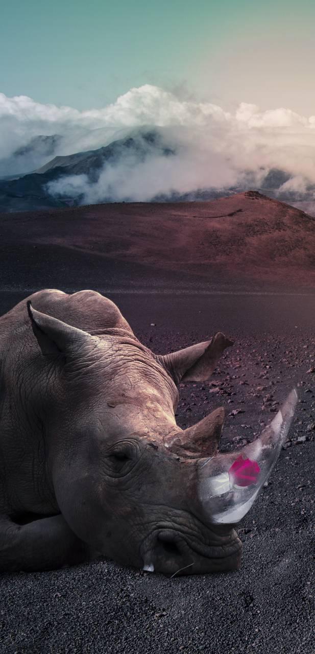 rose rhino