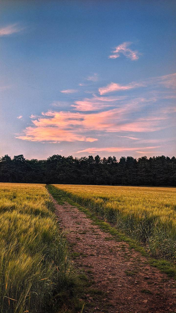 Peaceful peach path