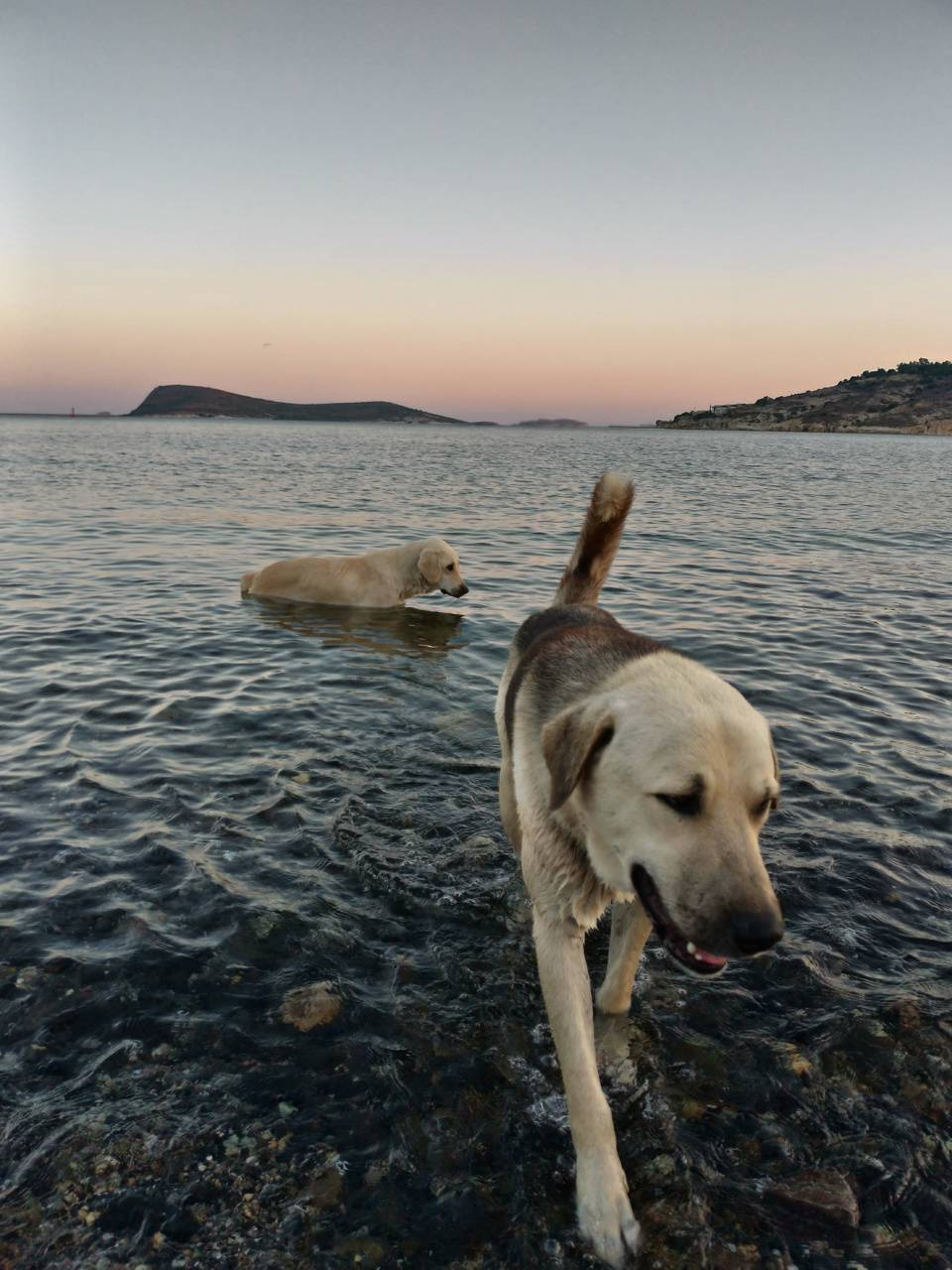 Dog-sea